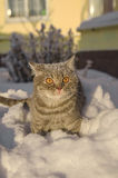 在雪的猫在随风飘飞的雪 库存照片