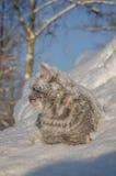 在雪的猫在随风飘飞的雪 图库摄影