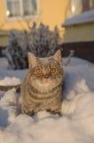 在雪的猫在随风飘飞的雪 库存图片
