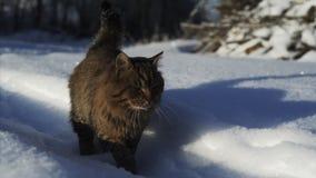 在雪的猫 股票视频