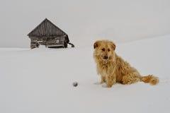在雪的看家狗 库存图片