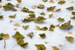 在雪的秋叶 免版税库存图片