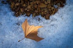 在雪的秋天叶子与木片 库存图片