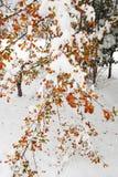 在雪的秋天叶子 免版税库存图片
