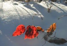 在雪的秋天叶子 库存图片