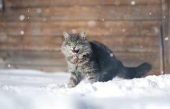 在雪的积极的猫 库存照片