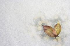 在雪的红色叶子 免版税库存图片