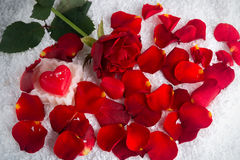 在雪的红色玫瑰与与瓣的心脏蜡烛 免版税图库摄影