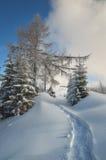 在雪的线索 库存照片