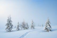 在雪的线索 库存图片
