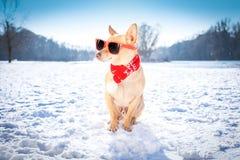 在雪的结冰的冰冷的狗 免版税库存照片