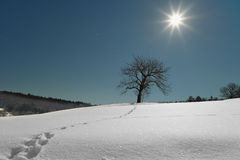 在雪的结构树由满月照亮在晚上。 免版税图库摄影