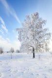 在雪的结构树蓝天。 冬天场面。 免版税库存照片