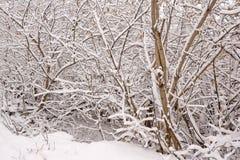 在雪的结构树 冬日场面 库存照片