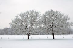 在雪的结构树 库存照片