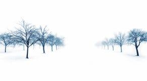 在雪的结构树 免版税库存照片
