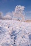 在雪的结构树 免版税库存图片