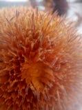 在雪的美丽的凋枯的向日葵 免版税图库摄影