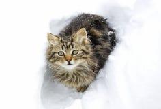 在雪的美丽的小猫 免版税库存图片