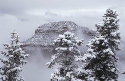 在雪的美国亚利桑那大峡谷北部外缘 库存图片