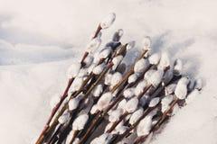 在雪的美好的猫杨柳分支 图库摄影
