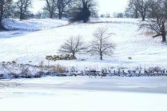 在雪的群 免版税库存照片