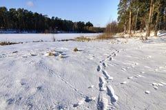 在雪的脚印 免版税图库摄影