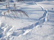 在雪的脚印 库存照片