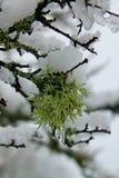 在雪的自然 免版税库存图片