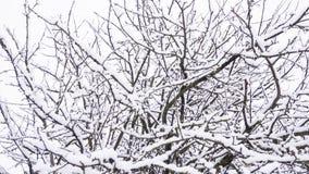 在雪的苹果树,在雪的分支,多雪的冬天 库存照片