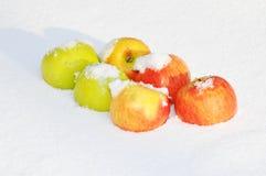 在雪的苹果 免版税库存照片