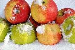 在雪的苹果 免版税库存图片