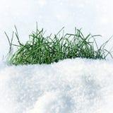在雪的草 库存照片