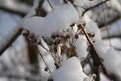 在雪的草 免版税图库摄影