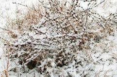 在雪的草 免版税库存图片