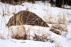 在雪的蚁丘 图库摄影