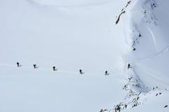在雪的蚂蚁 库存照片
