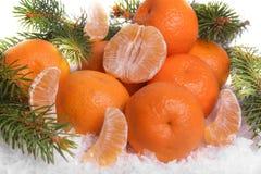 在雪的蜜桔与冷杉分支 免版税库存图片