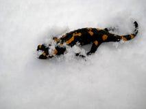 在雪的蝾 免版税库存图片