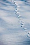 在雪的起动踪影在森林里 免版税库存图片