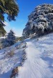 在雪的足迹 免版税库存照片