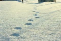 在雪的跟踪 免版税图库摄影