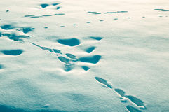 在雪的跟踪 图库摄影