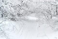 在雪的路与树 免版税库存图片