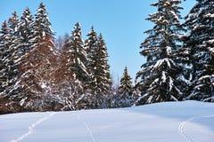 在雪的踪影往森林 免版税库存照片