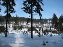 在雪的轨道在冬天森林里 免版税库存照片