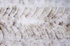 在雪的轮胎轨道 库存图片