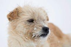 在雪的逗人喜爱的困狗 库存图片