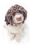 在雪的逗人喜爱的狗 图库摄影