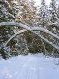 在雪的道路在树干下的冷杉木之间成拱形 免版税图库摄影